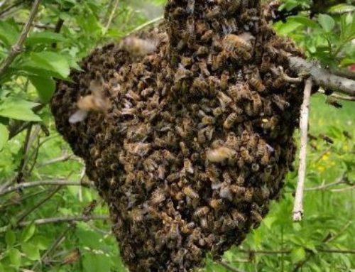 Stopp 5G – Zum Schutz der Bienen!